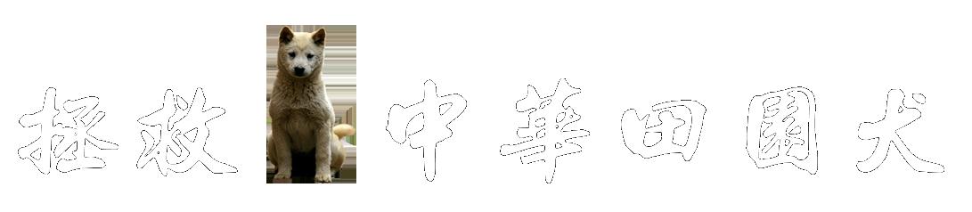 拯救中华田园犬|拯救中国土狗