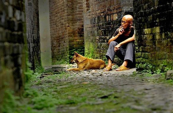 中华田园犬经典摄影——老人·土狗