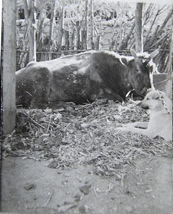 1980 北方