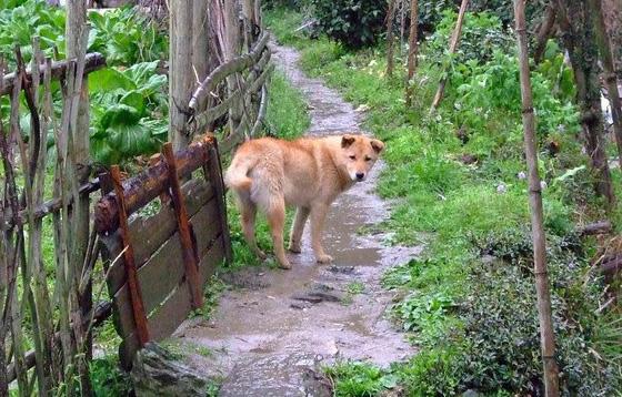 中华田园犬的天堂,太美了
