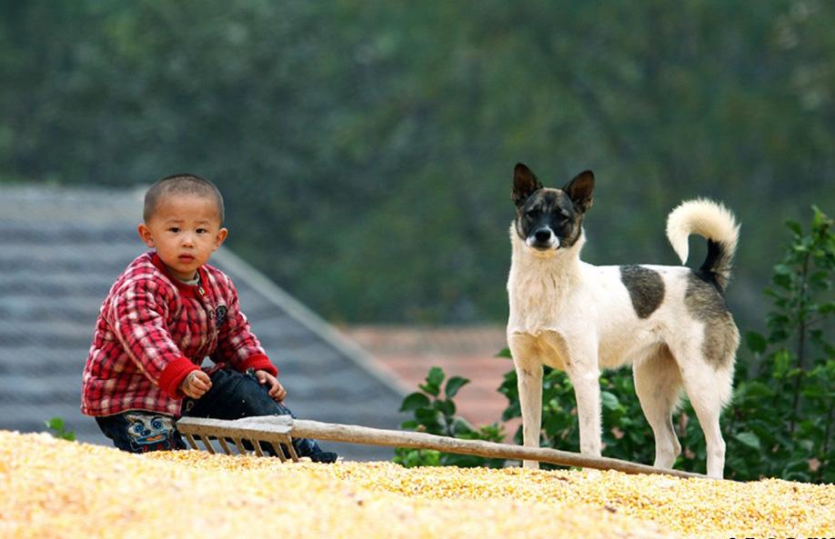 中华田园犬经典摄影——童年·土狗